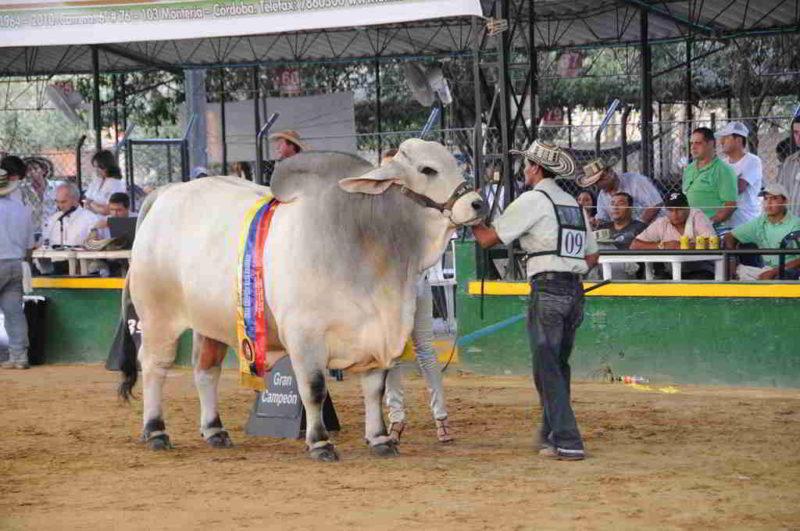 Fomento del turismo en el departamento de c rdoba colombia for Oficina de turismo en cordoba