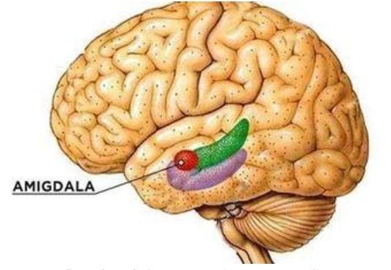 Efecto Malas Noticias Cerebro Humano