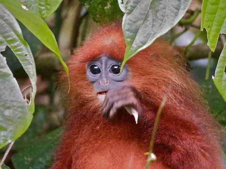 Borneo. Historia de una catástrofe ecológica que aún no ha terminado