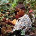 Explotación laboral infantil en México