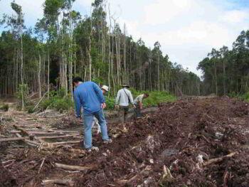 De cómo Borneo ya tuvo su propio cambio climático hecho por manos humanas