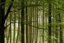 Sustentabilidad y tecnología verde, cuidando el planeta desde la oficina