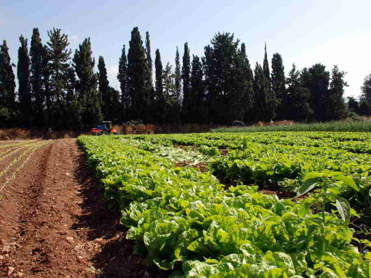 Agricultura Digital. Cosechando rentabilidad