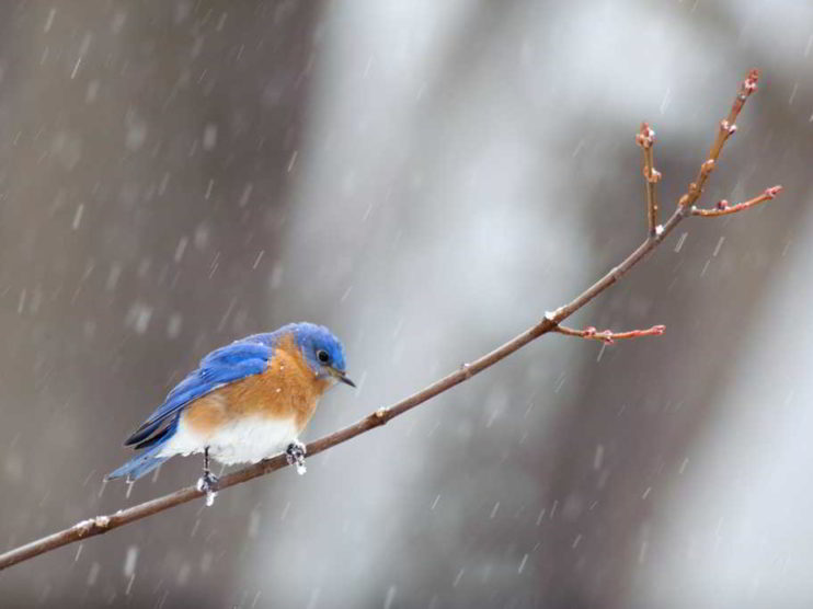 ¿Pájaros en la cabeza?. Tres mecanismos para mejorar su visión y efectividad
