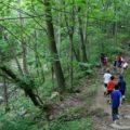 Estrategia para enseñar el amor a la naturaleza a alumnos de grado sexto