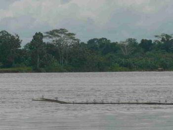 La Selva del Amazonas, el Pulmón del Mundo