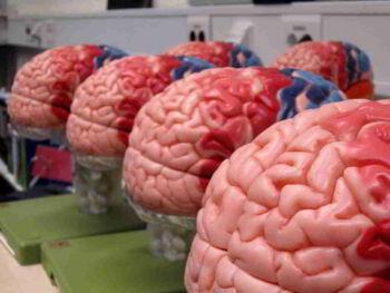 Importancia de las neurociencias y el comportamiento. Ensayo