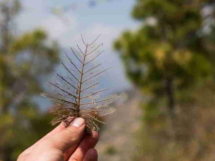 Objetivos de Proyectos Forestales: Modificando conceptos y paradigmas