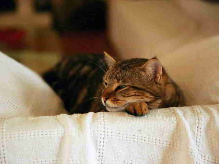 12 señales que indican que estás en tu Zona de Confort
