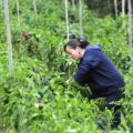 Determinantes del PIB del Sector Agricultura en Colombia. Modelo Econométrico