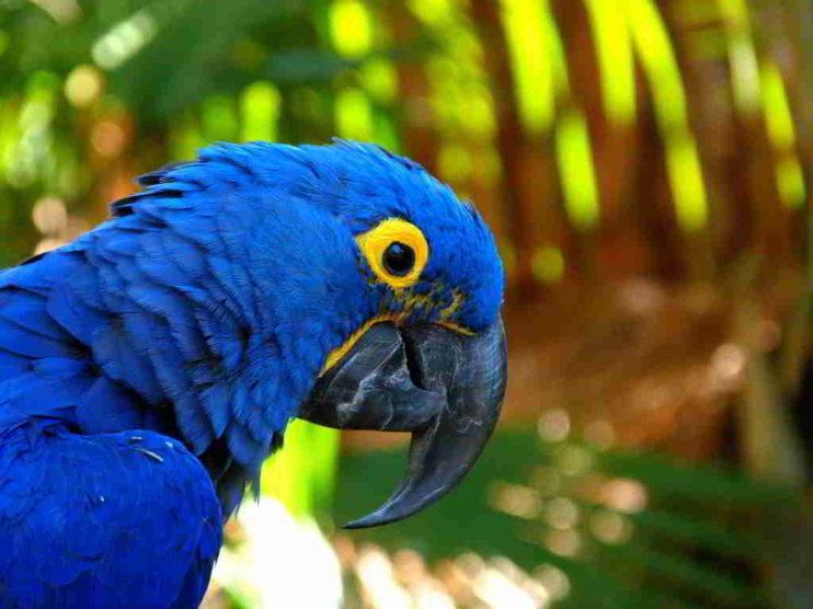 El tráfico de especies silvestres en Perú y el mundo: una amenaza latente