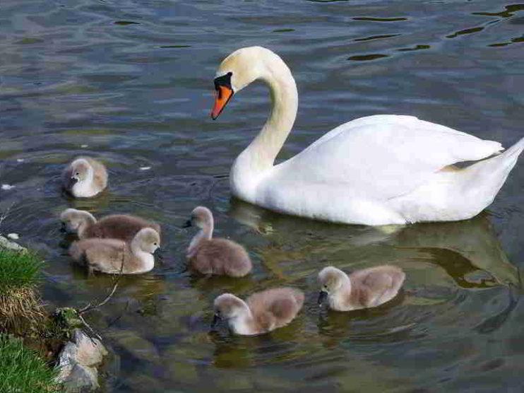 Cómo elevar el porcentaje de empresas familiares exitosas