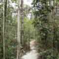 El Homo predator en Borneo