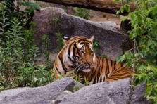 Tigres Asiáticos, integración Asia-Pacífico y crisis Asiática