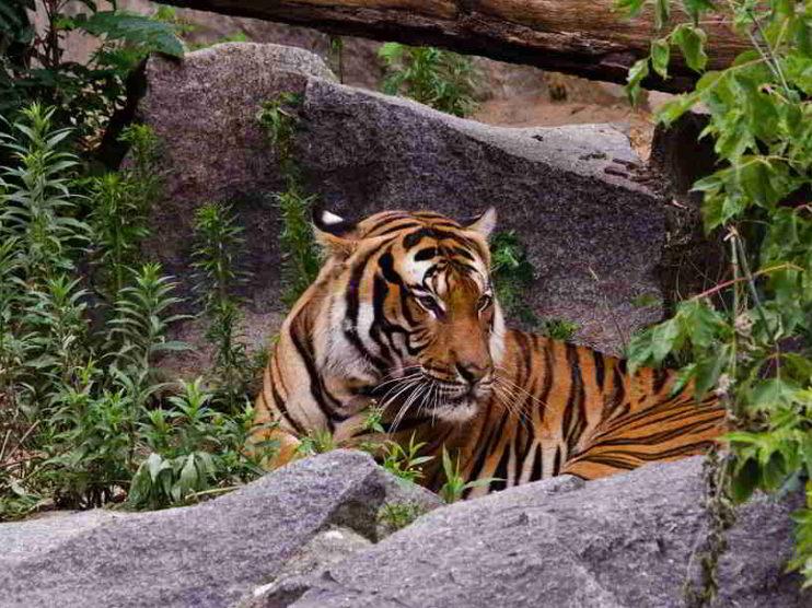 Los Tigres Asiáticos y su evolución económica