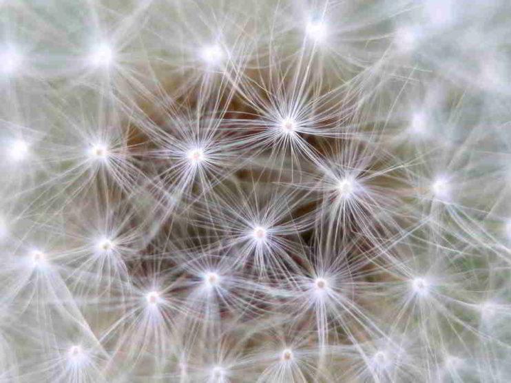 Gerencia y Neurociencia