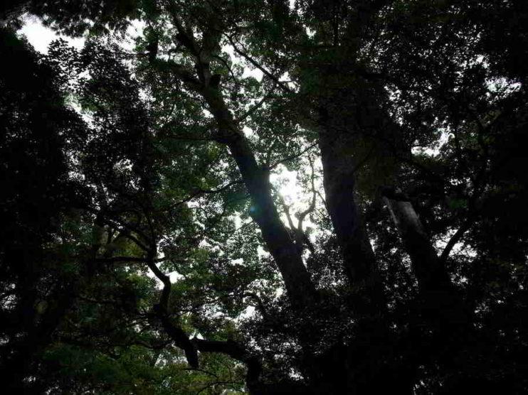 Plantas purificadoras de aire para contribuir al cuidado del medio ambiente