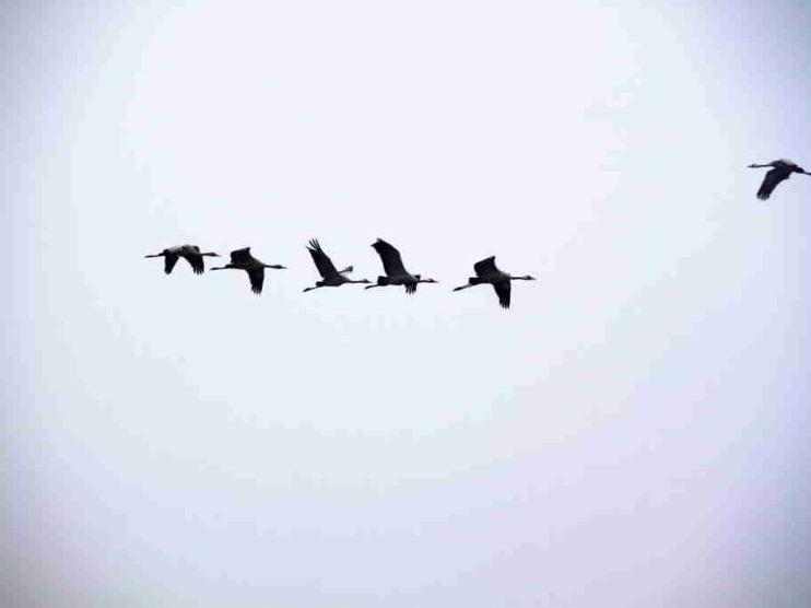 Reflexiones sobre el libro: La Sabiduría del Líder. Enfoque actual de liderazgo