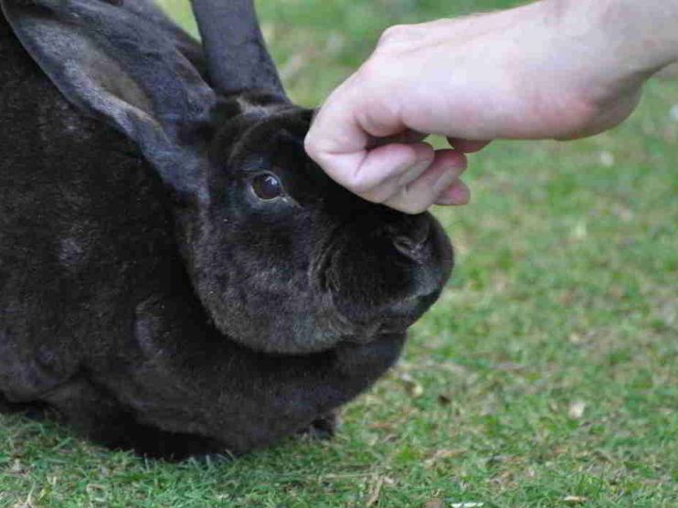 Cría de conejo. Proyecto de producción y comercialización de Conejos