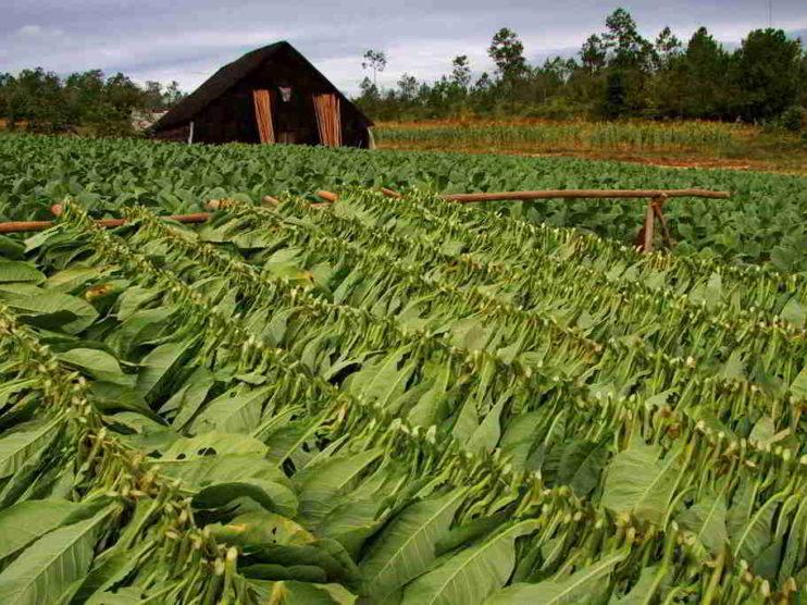 Dirección por valores en la Empresa de Tabaco Torcido Villa Clara