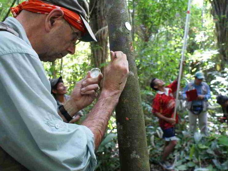 Cacao en Perú. Tesoro de la biodiversidad amazónica para el mundo