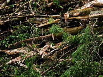 Todo el mundo ama la madera, pero los árboles se acaban