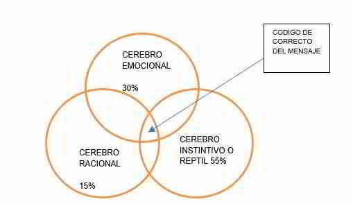 Cerebro emocional, racional y reptil
