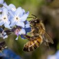 Las abejas nada tienen que celebrar