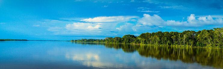 Día Internacional de los Bosques: ¿Quién es el dueño de la selva del Amazonas?