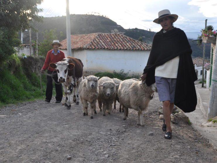 Campesinos, tierra y desarrollo rural en Colombia