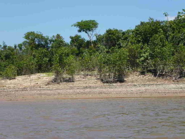 El Amazonas. El mayor reservorio de agua dulce del planeta y la amenaza de sequía