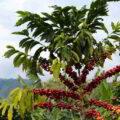 Colombia: País estratégico para negocios