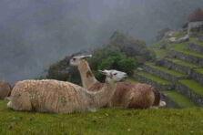 En el Día de la Patria: El reino de Perulandia