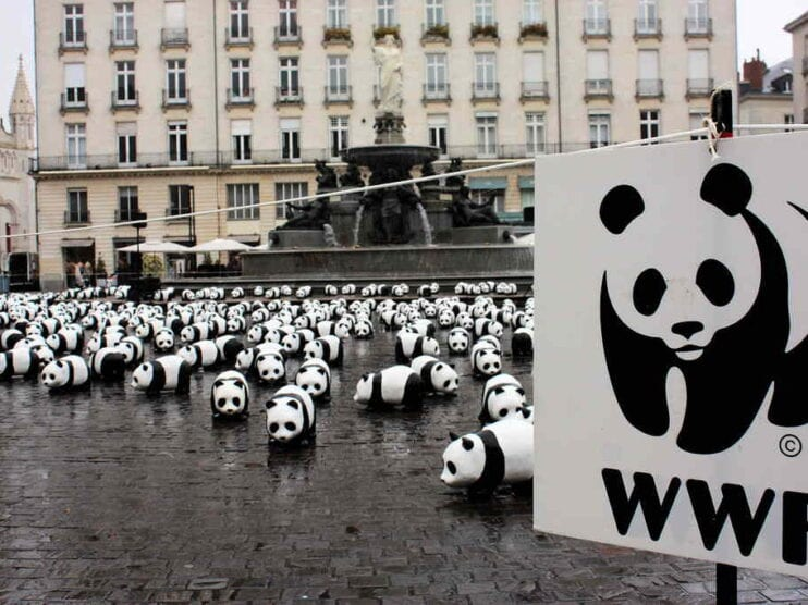 Social Marketing como estrategia para ser una empresa sostenible y apostar por un mundo mejor
