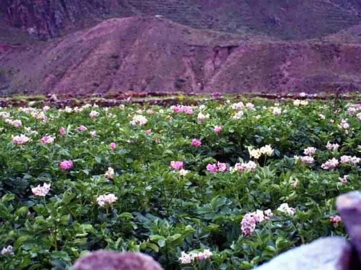Análisis logístico de una empresa agraria en el Perú