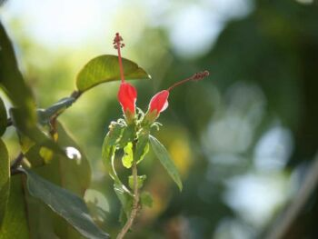 La Contabilidad ambiental y los Objetivos de Desarrollo Sostenible