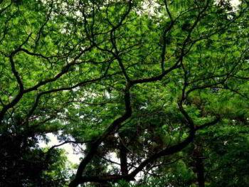 Proyecto Forestal para el desarrollo del mercado local de madera en Cuba