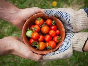 Valor Compartido, Responsabilidad Social y Comercio Justo