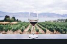 Estrategia empresarial de una empresa vitivinícola. Propuesta de acciones de mejora